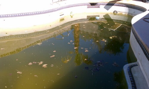 Pool-D-Before